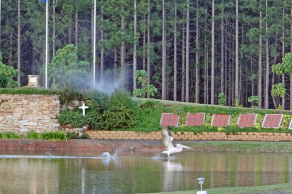 Standown 23AA